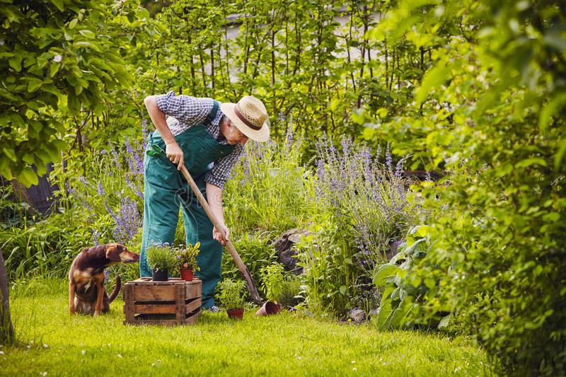 Projektowanie ogrodów jako sztuka aranżacji zieleni